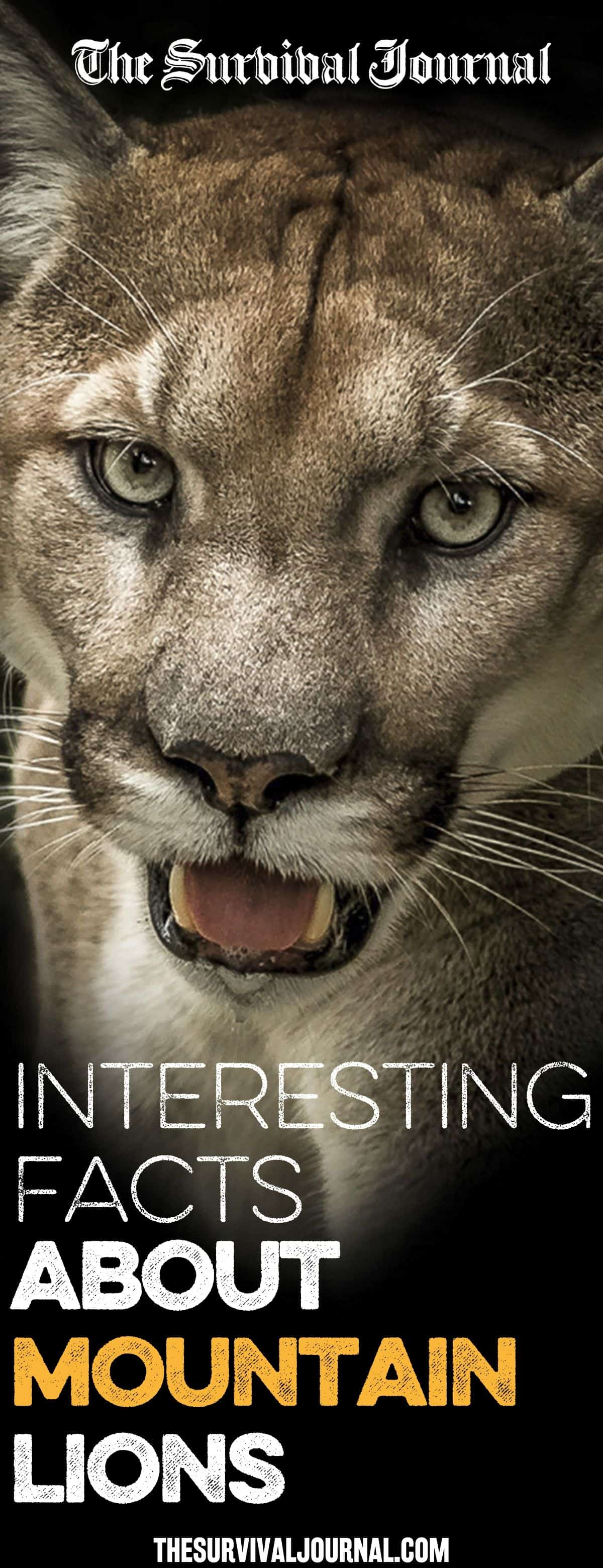 Interesting Facts About Mountain Lions