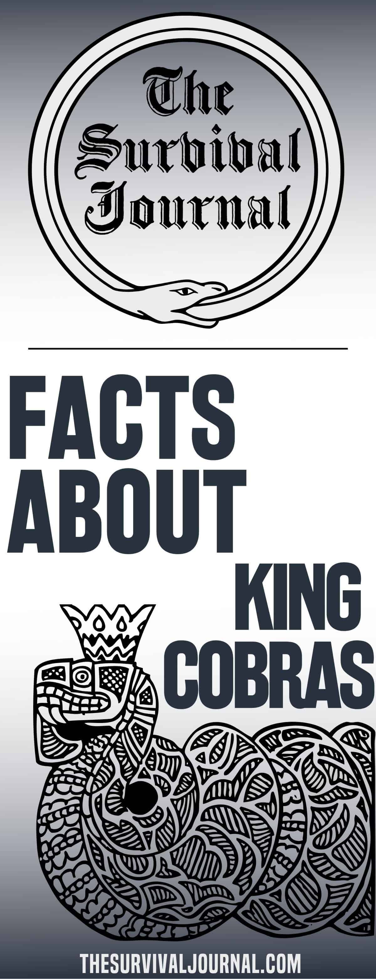 facts about king cobras