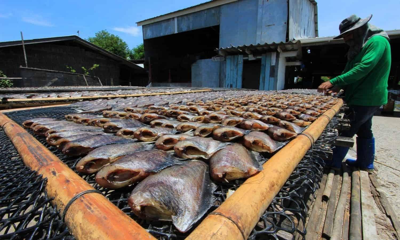 diy bamboo fish grill